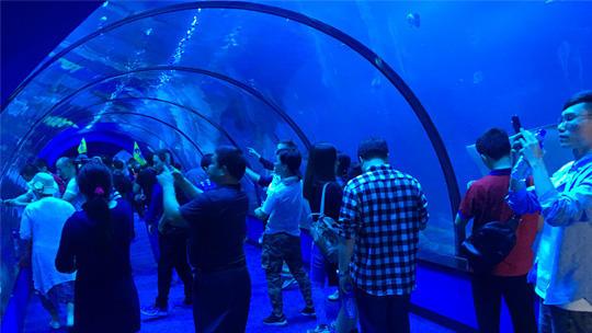 淡水鲨鱼有几种_福建长泰天柱山欢乐大世界门票团购_中国国旅(厦门)国际旅行社
